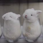 Cute little baby bunnies in glass cups