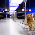 Photographer turns stray dog into a beautiful lion